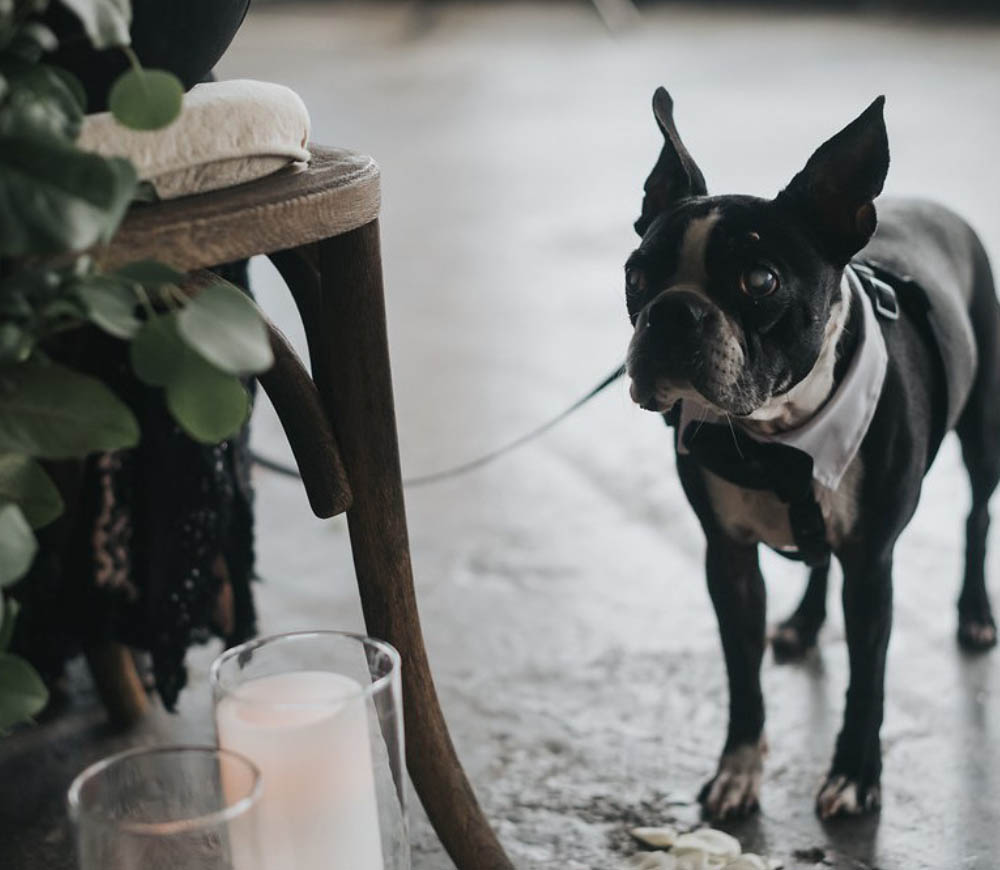Wedding at Leftbank Annex french bulldog